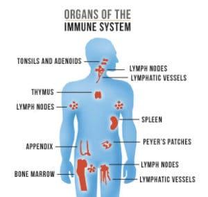 Immune System For Viral Arthritis Treatment